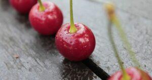 Meggy (Prunus cerasus)