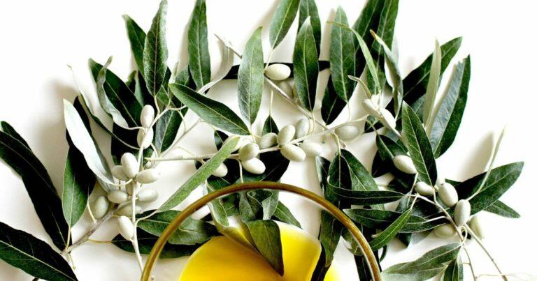 Olajfalevél (Olea Europaea)