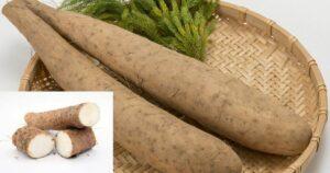 Jamgyökér, Jamszgyökér, Yam gyökér (Dioscorea villosa)