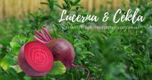 A lucerna & cékla – szervezetünk természetes vasforrásai