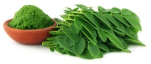 moringa level