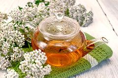 cickafarkfű tea
