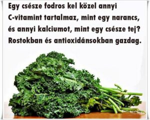 fodros kel1